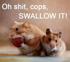 funny-hamster-eating-strawberry